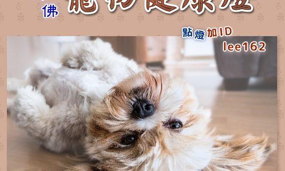 寵物健康燈【藥師壇場.寵物點燈】