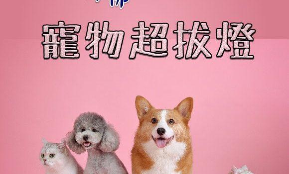 寵物往生/超拔燈【藥師壇場.寵物點燈】
